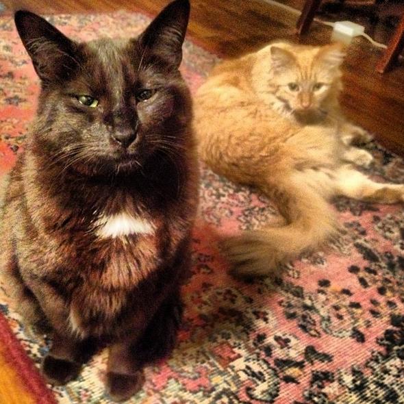 Tuna & Fuzz